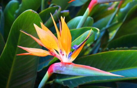 Botanic Garden Madeira