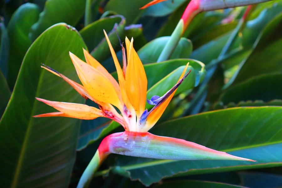 Madeira_Botanical Garden