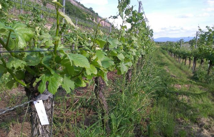 Weinreise Baden