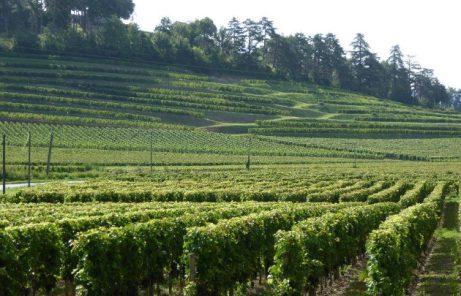 Weinhändler mit Profil